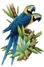 Papegaaien-op-tak
