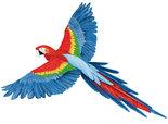 Papegaai-(groot)