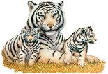 Witte-tijgers