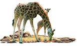 Giraf-met-Jong