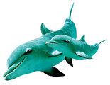 Dolfijn-met-Jong