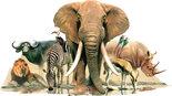 Afrikaanse-Dieren