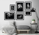 Ingelijste zwart-wit posters dieren jungle safari